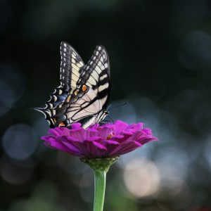 close-up-photography-of-butterfly-1067202