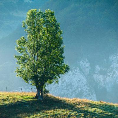 countryside-dawn-daylight-environment-286305